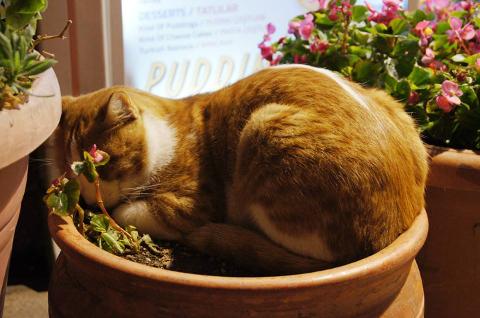 Mindig van a közelben egy cica (Fotó: Kántor Zita)